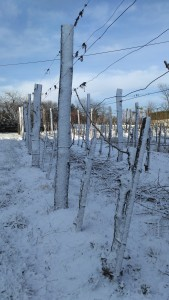 Zimska rez